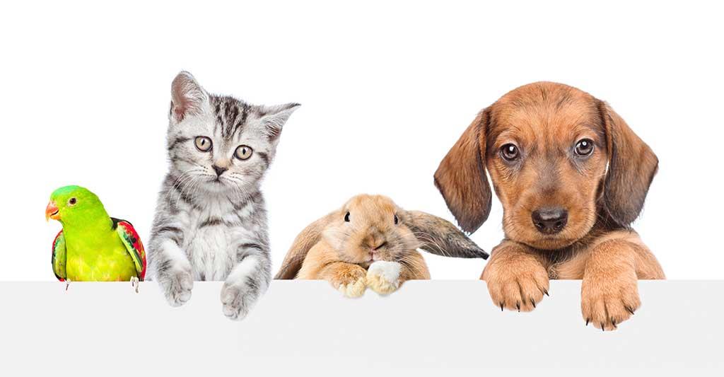 bird, parakeet, kitten, cat, bunny, rabbit, puppy, dog, pets, pet-nup, benefits of adding your pet to your pre-nuptial agreement.