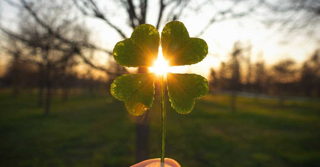 four leaf clover held up in the gleam of the setting sun, basics of estate planning in florida